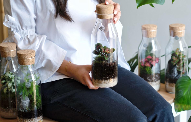 حوض زجاجي مغلق 'نباتات للمكاتب'