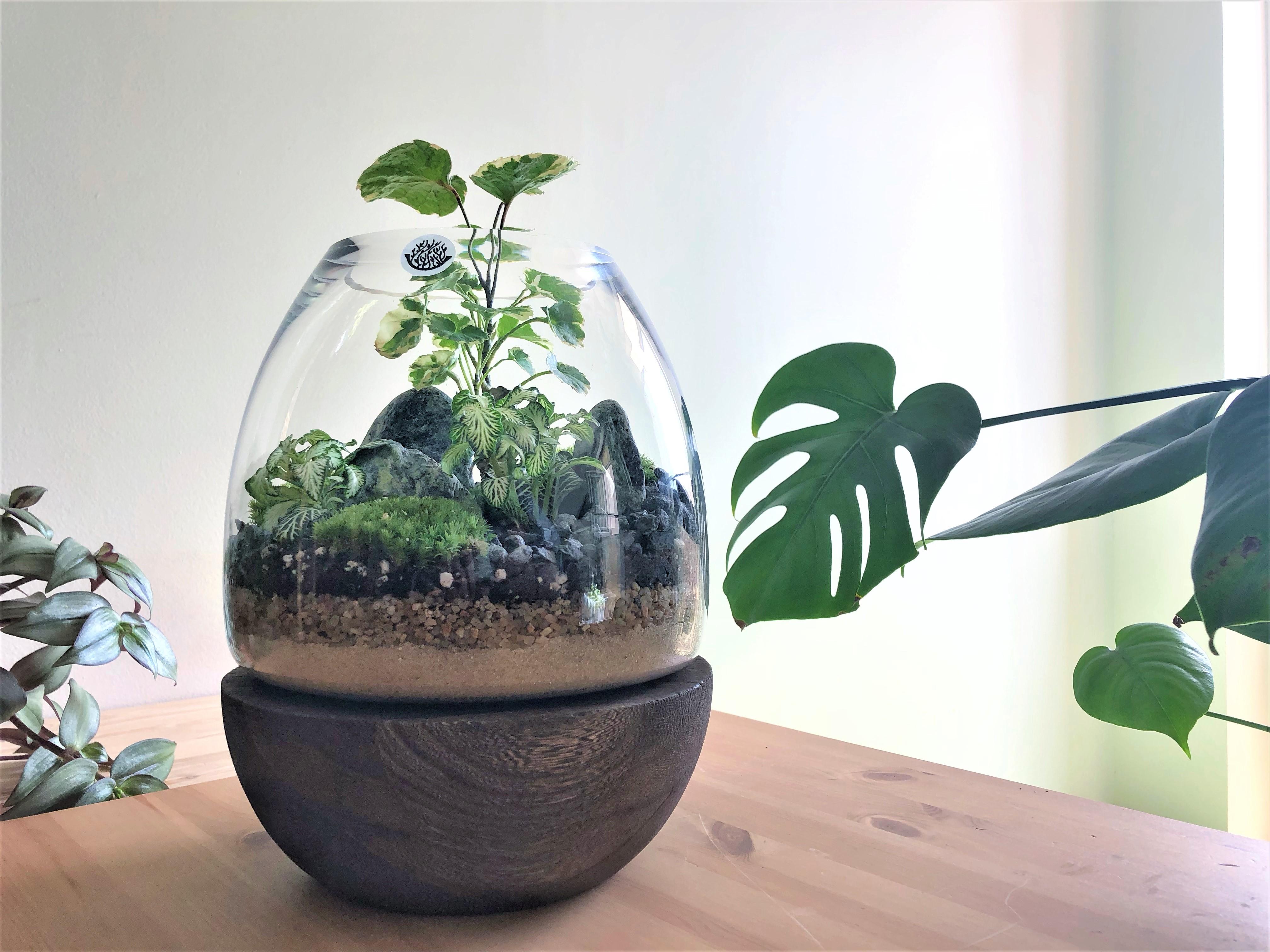 Dark Wooden Plate Terrarium - Medium Office Plants