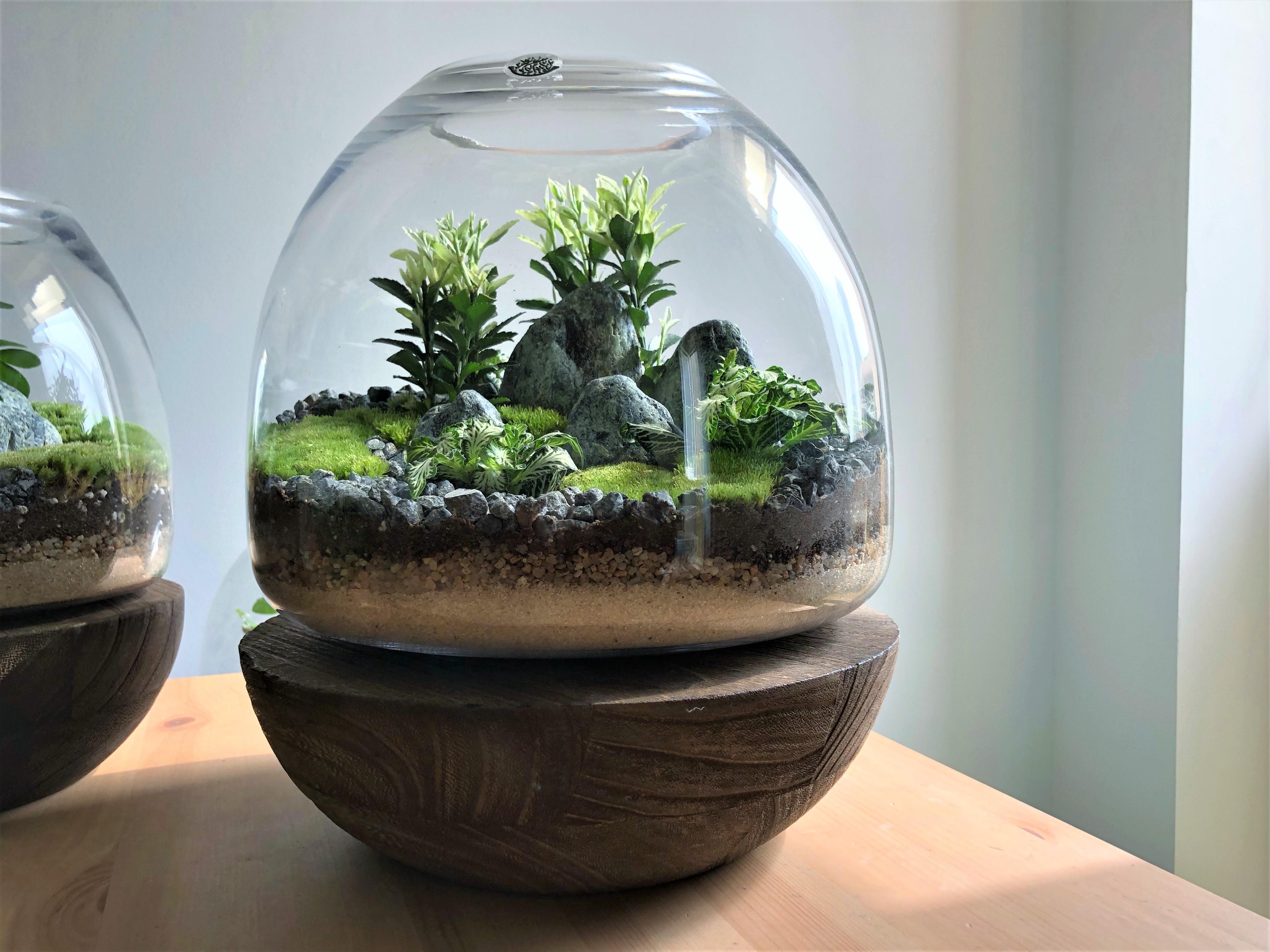 حوض زجاجي كبير بقاعدة خشبية  نباتات للمكاتب