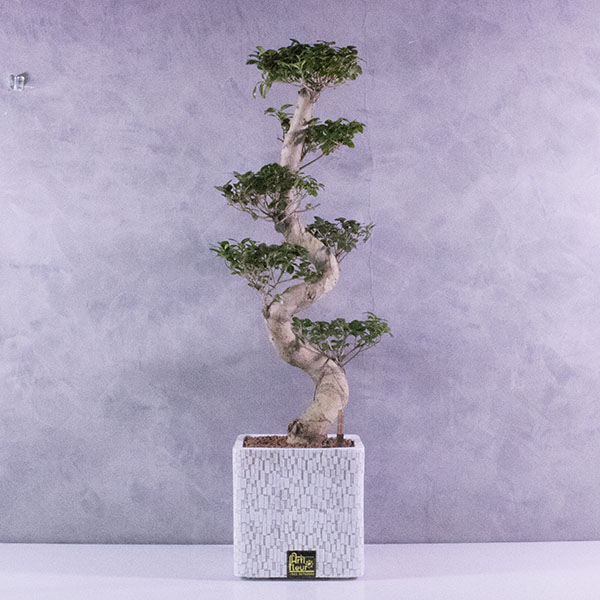 Capi planter square Premium Collection
