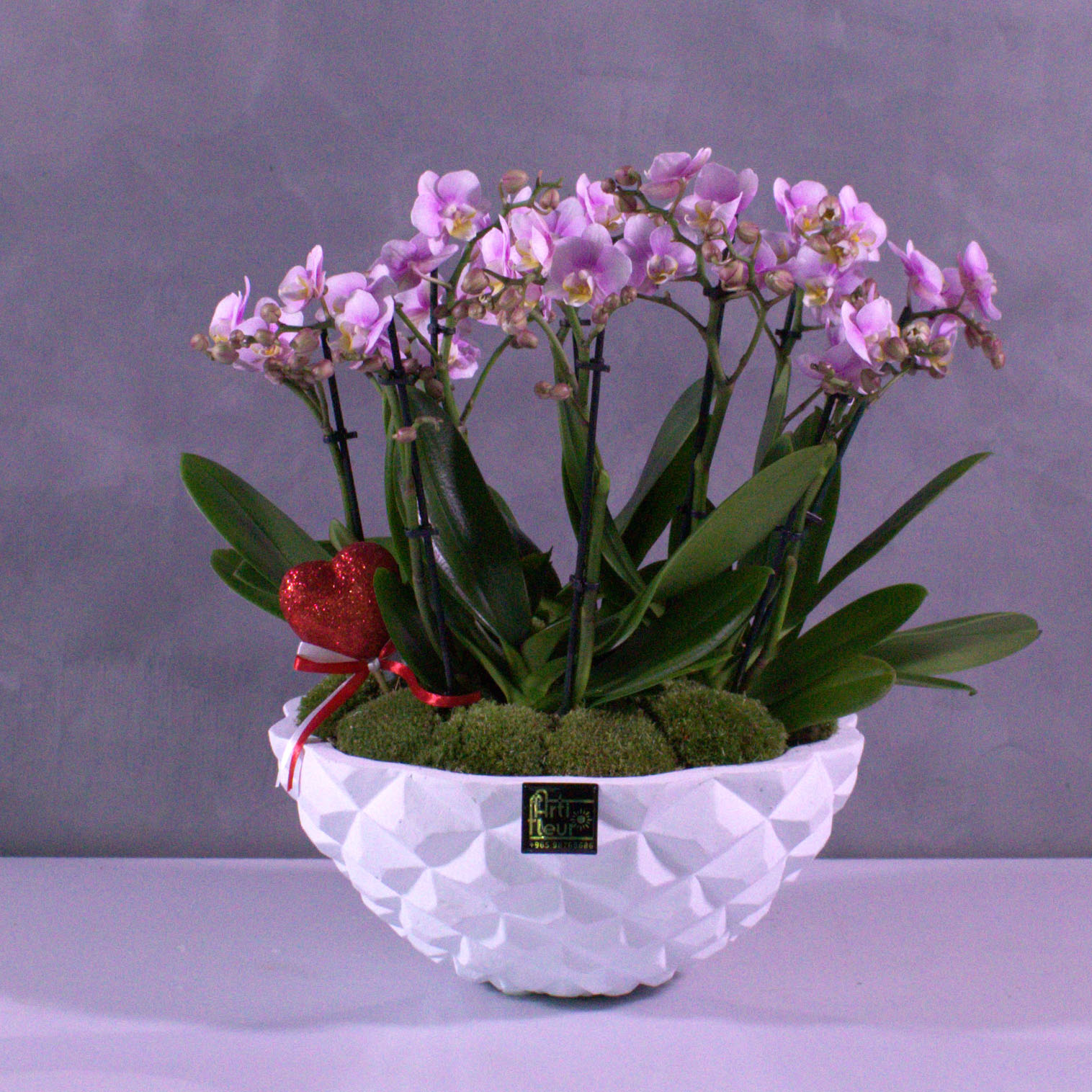 Mini Pink Orchids 'Premium Collection'