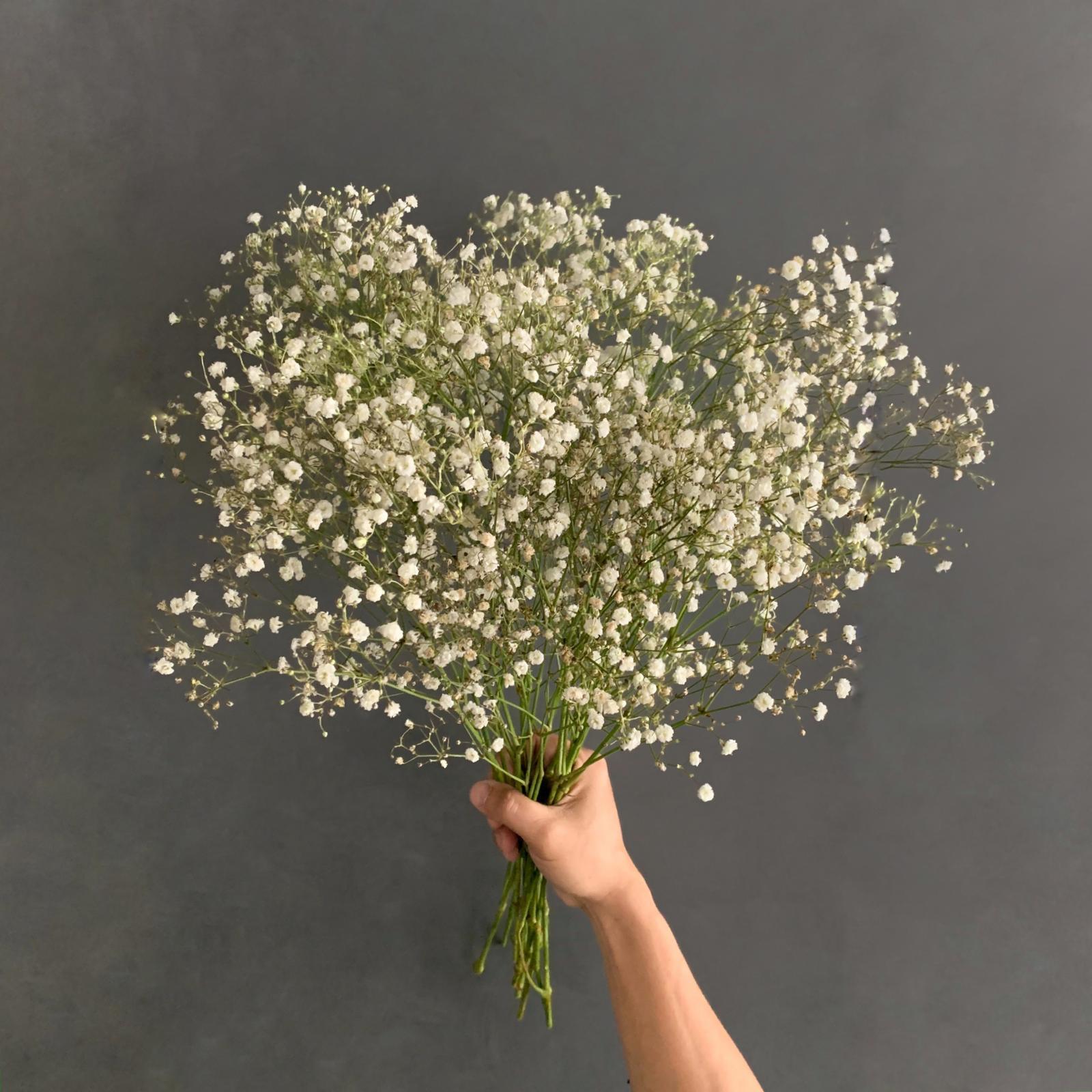 Gypsophilla White 'Wholesale Flowers'