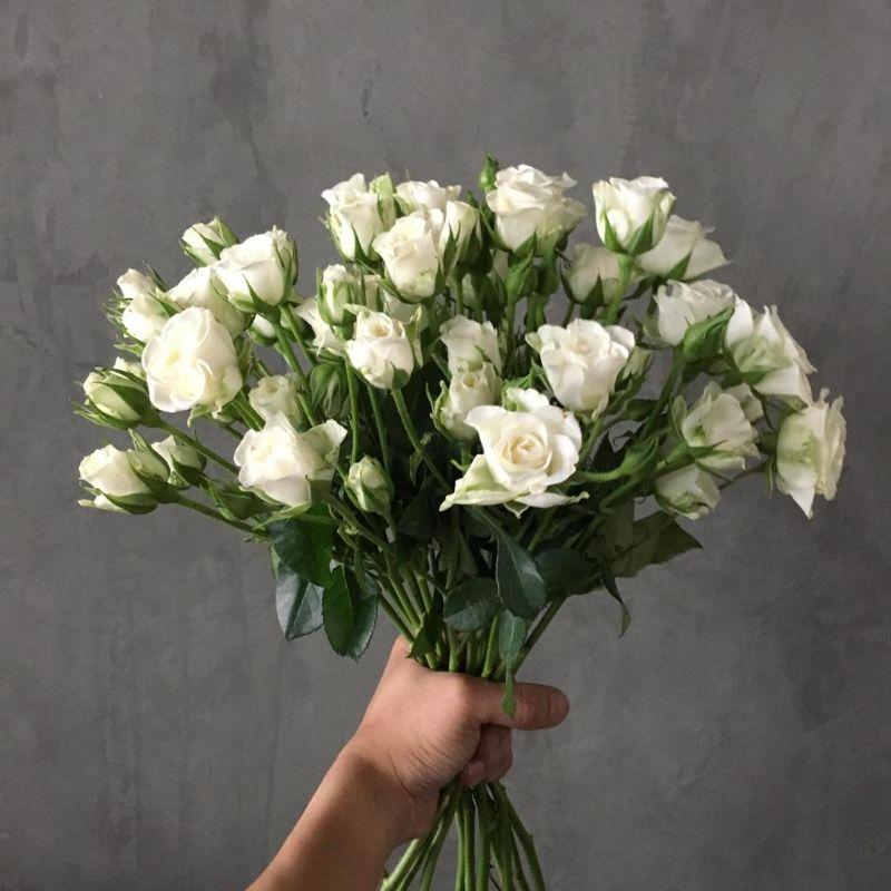 Baby Roses White  Wholesale Flowers