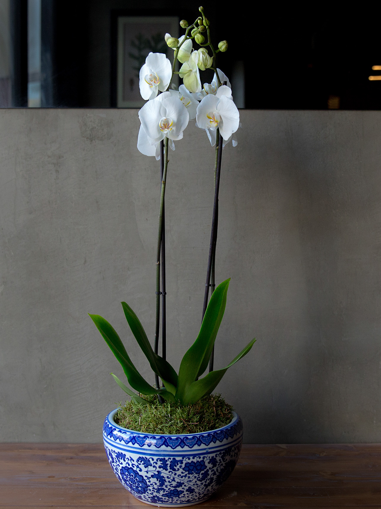 Royal orchid Flower with Base