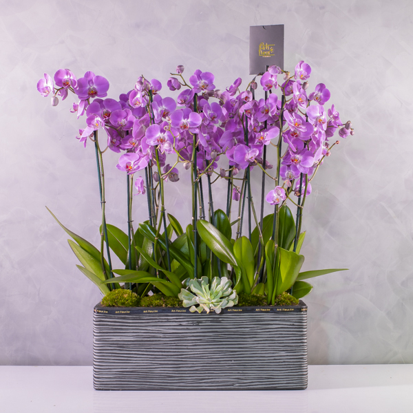Orchids in capi planter - pink Premium Collection