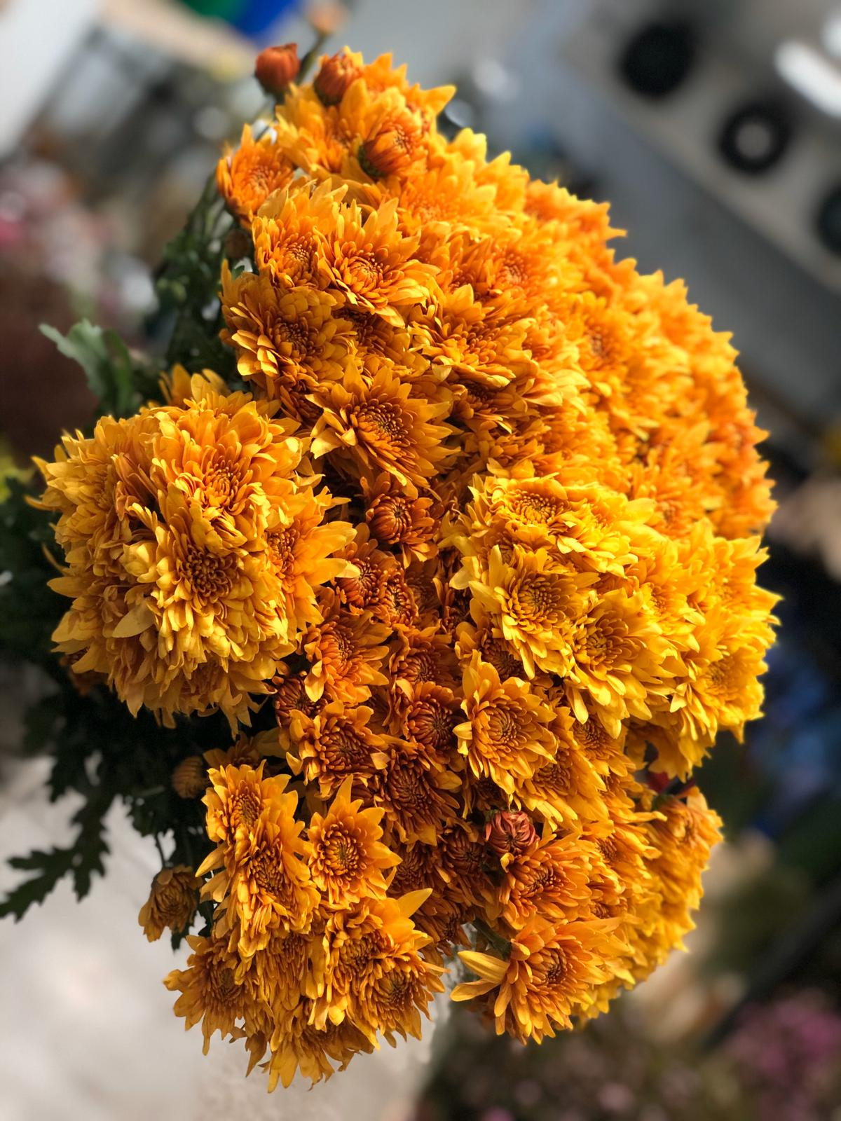 Chrysanthemum Orange  Wholesale Flowers [Special Deals]