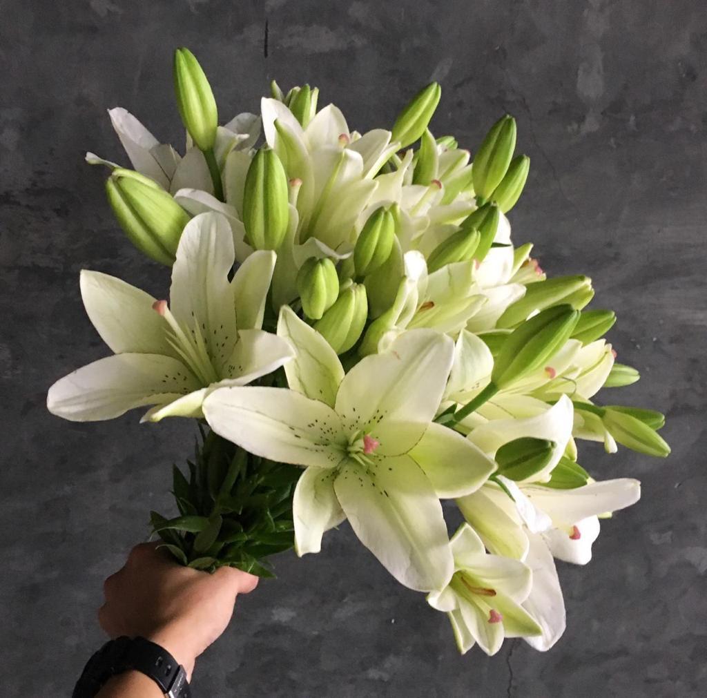 ليليوم أبيض  الزهور بالجملة