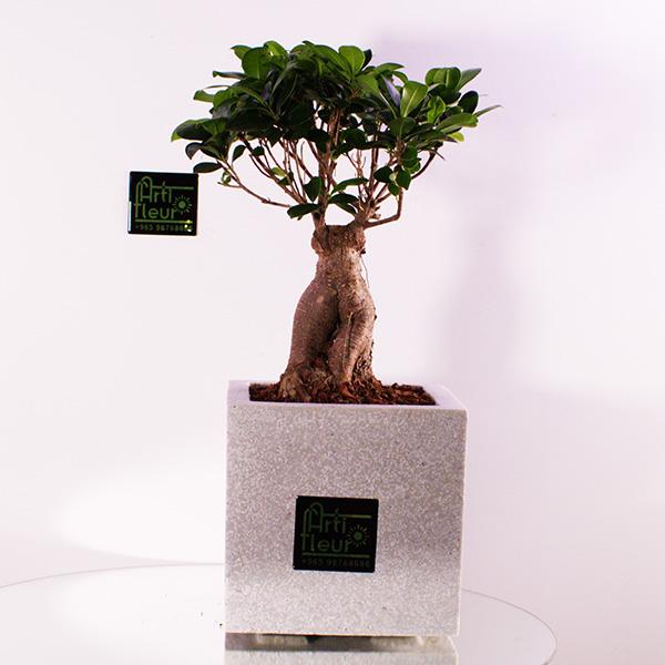 Polystonevase With Lucky Bonsai 'Premium Collection'