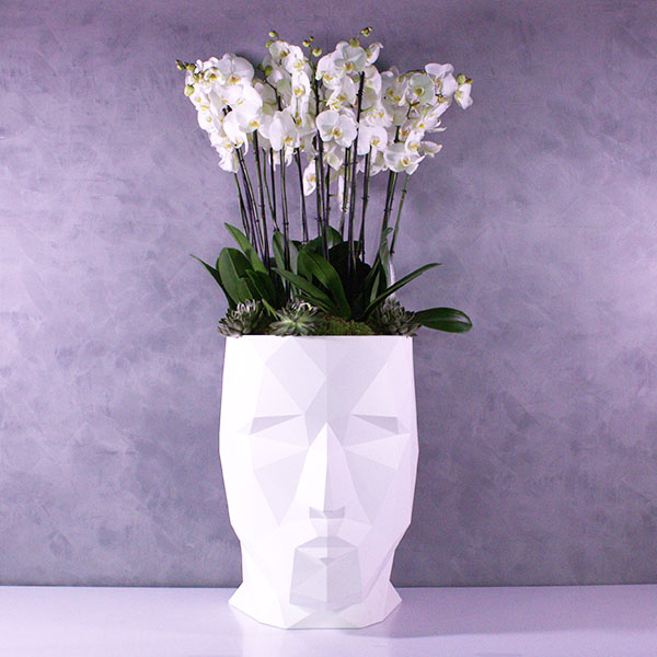 Adan Face With Xxl Orchids 'Premium Collection'