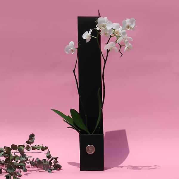 GROW Signature  Indoor Plants