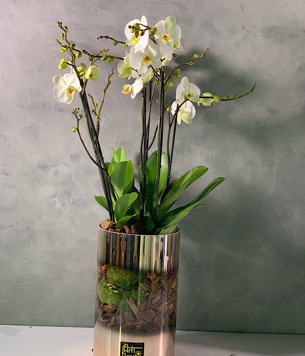 Orchid in a Cylinder rose gold glass vase Premium Collection