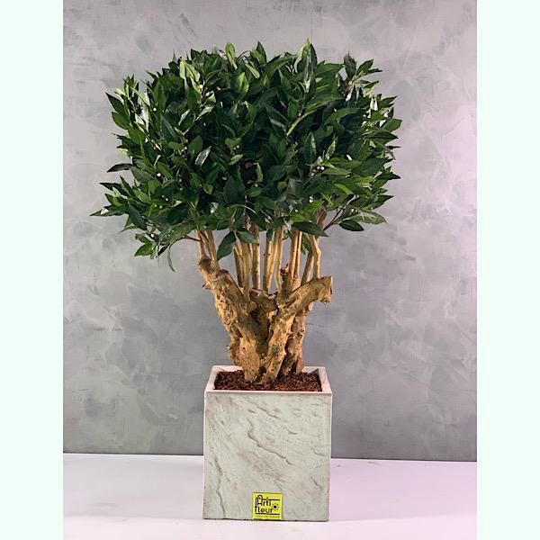 artificial bonsai look laurus Premium Collection