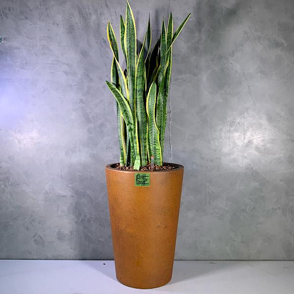 snakeplant brown planter Premium Collection