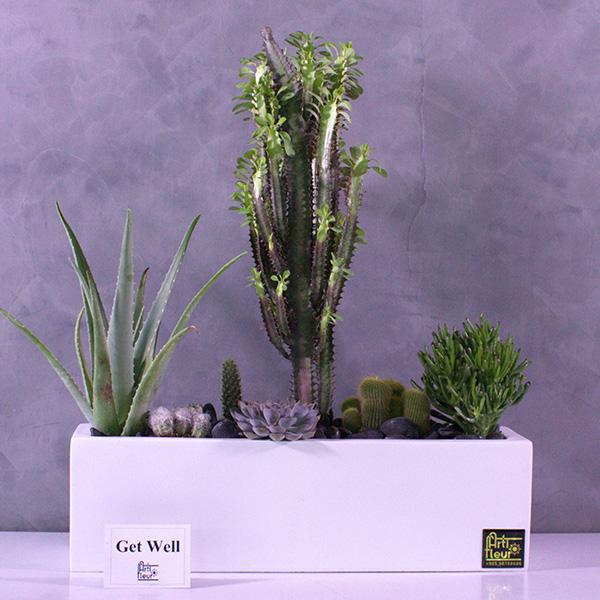 Cactus garden Office Plants