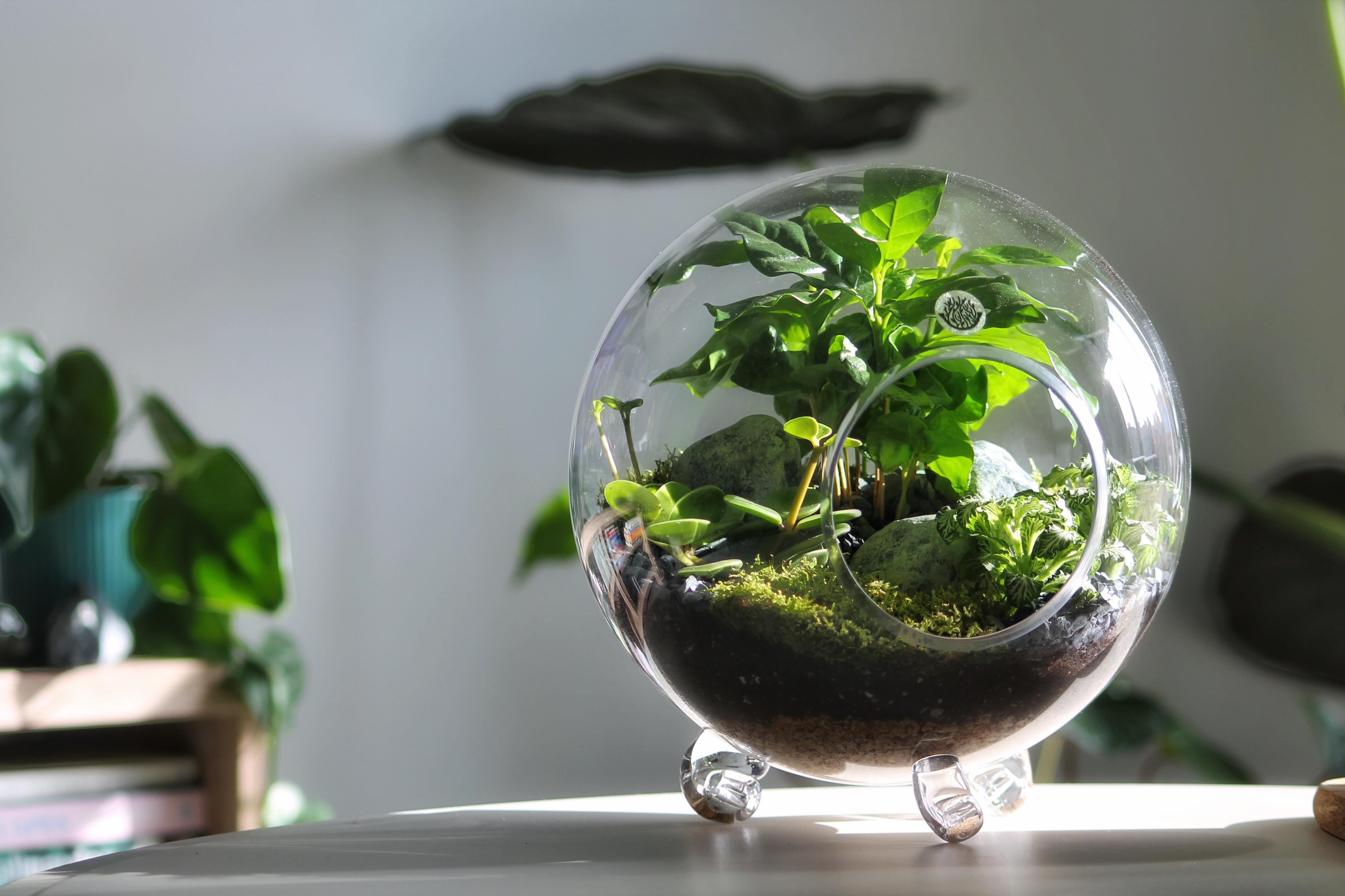 حوض زجاجي كلاسيكي مائل 'نباتات للمكاتب'