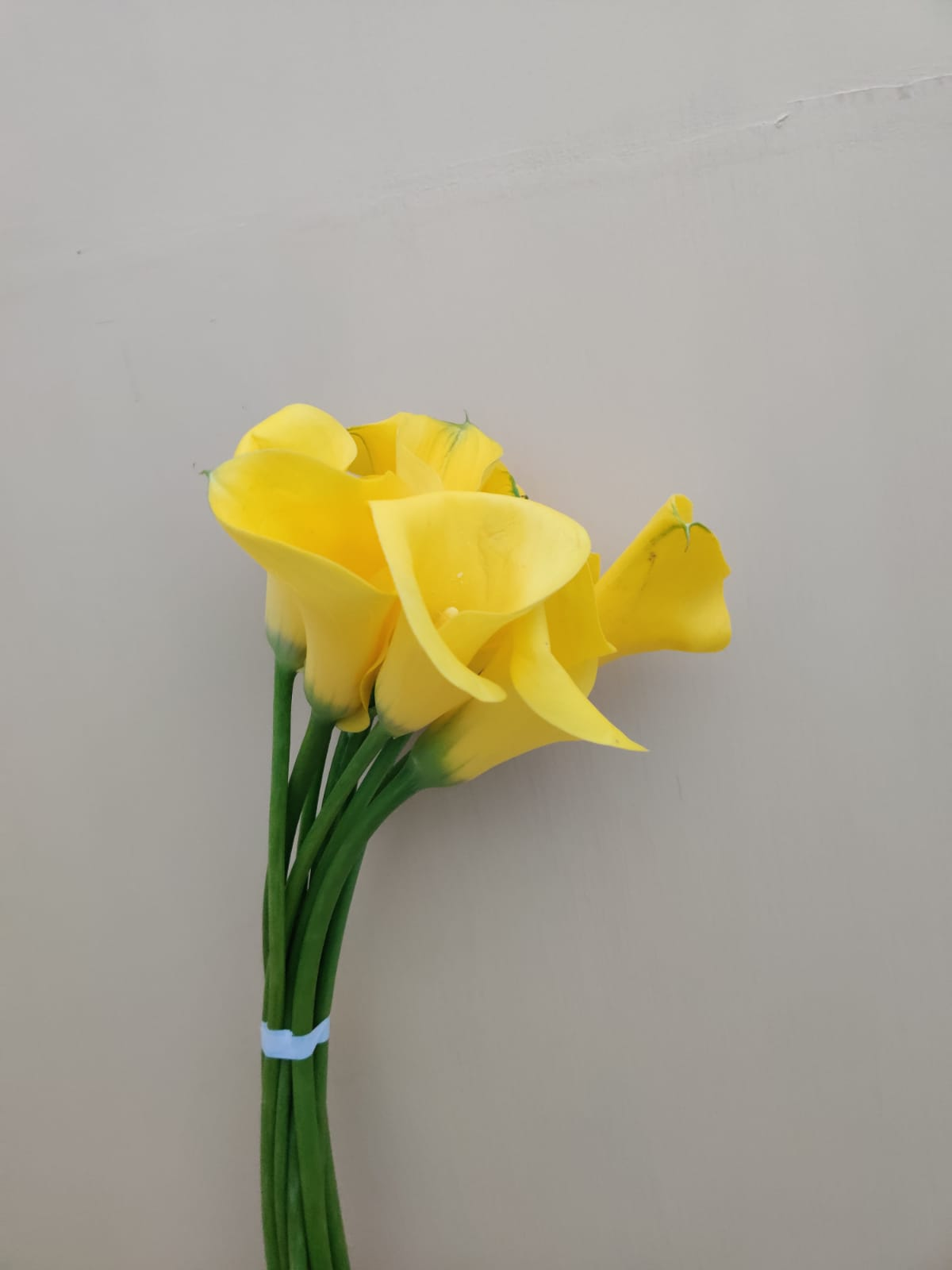 Calla Gold Medal Yellow Wholesale Flowers