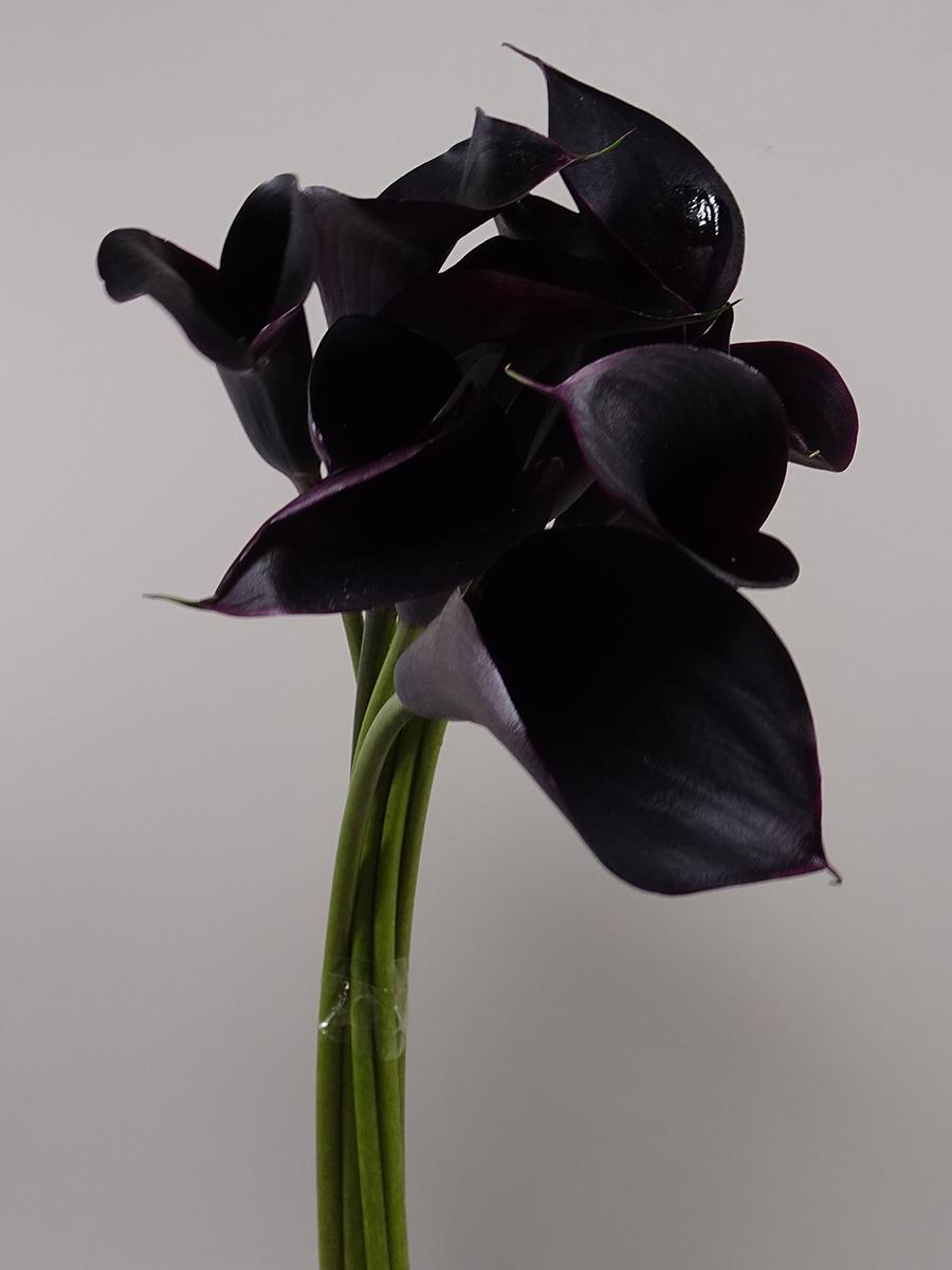 Calla Diamond Black Wholesale Flowers