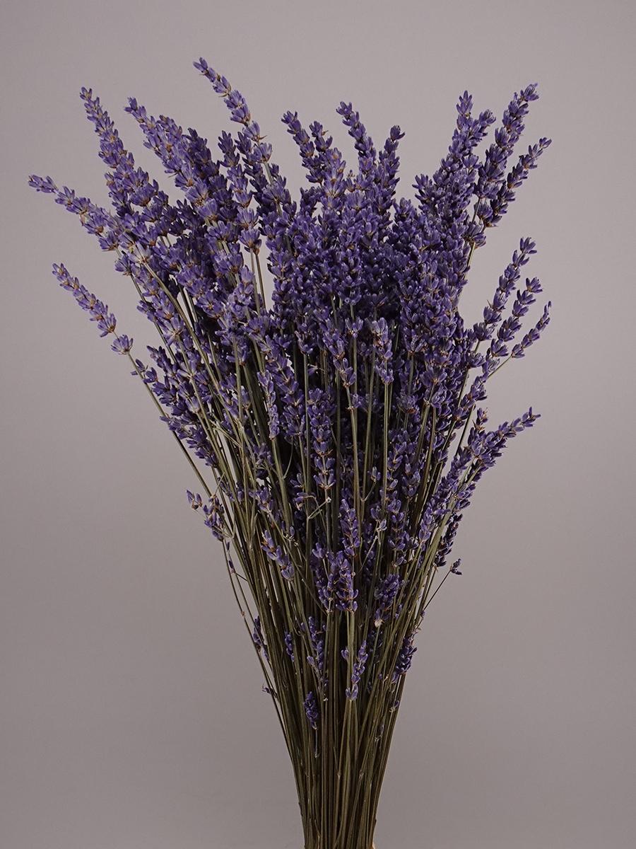 Dried Lavender Wholesale Flowers