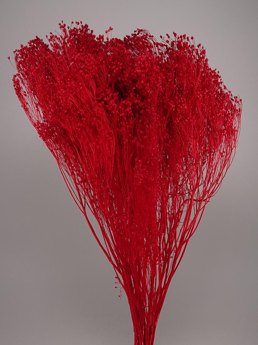 Dried Broom Bloom Gaint Red  Holiday Season