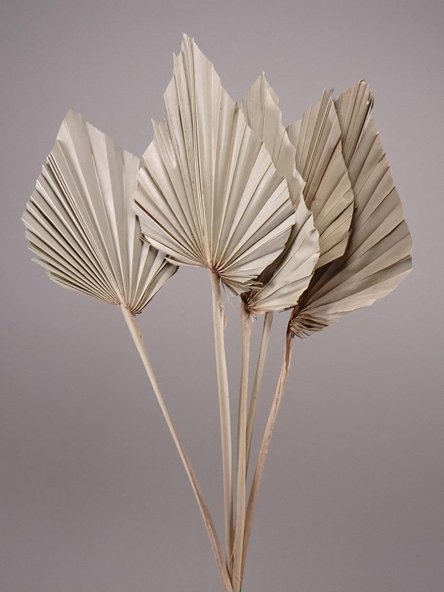 Dried Palm Leave   ' الزهور بالجملة'