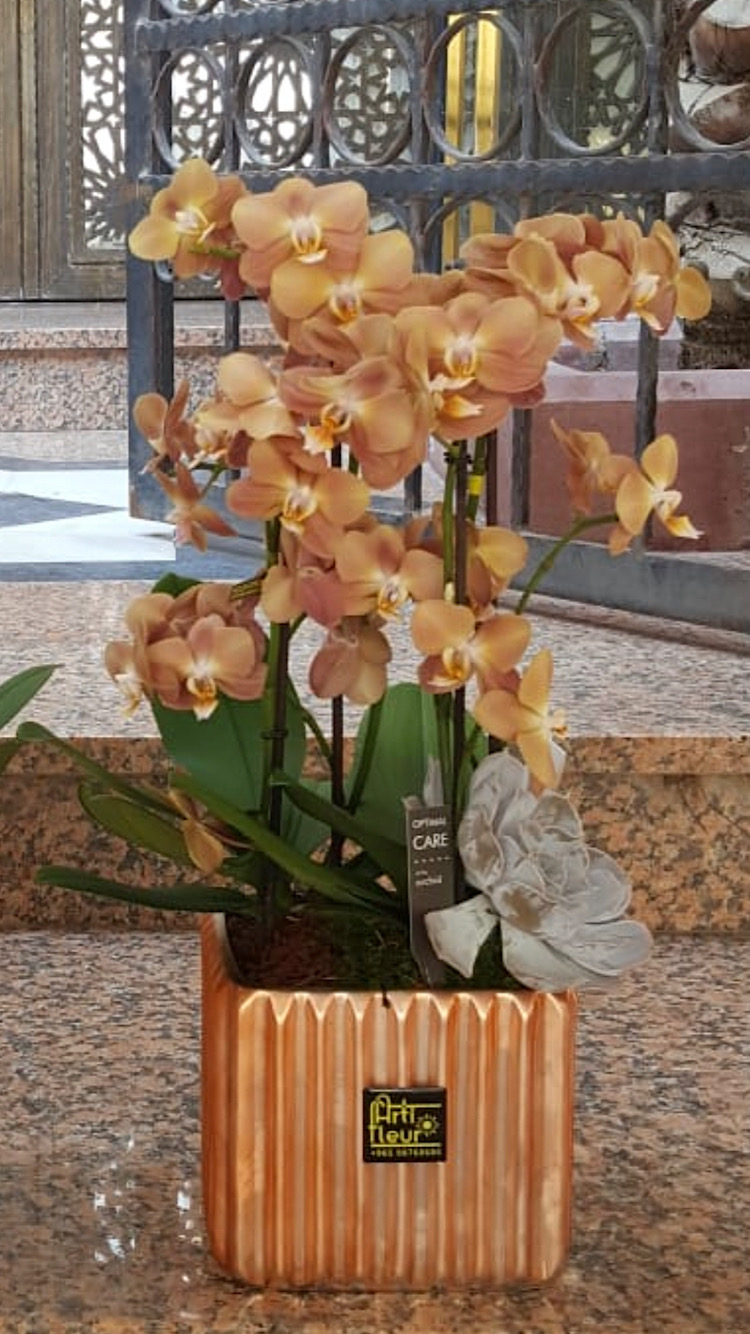 Peach Exclusive Orchids 'Indoor Plants'