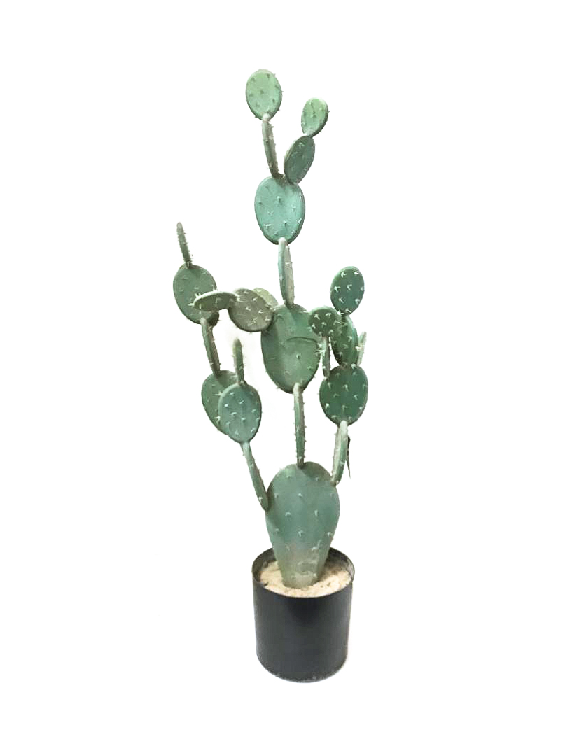 Cactus Green  Plastic Medium Artificial Plants