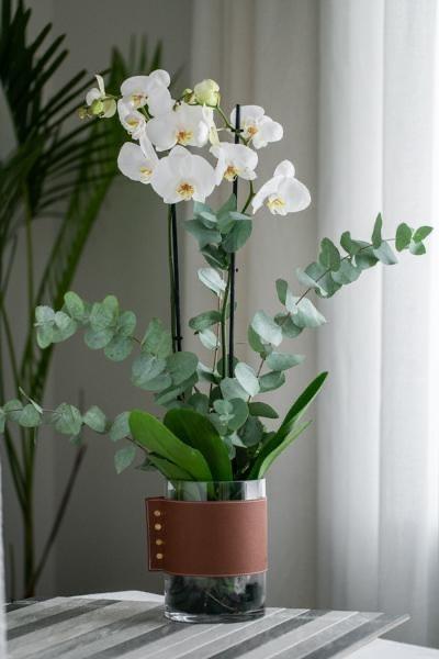 نبتة  الاوركيد الابيض - جلد بني 'زهور مع قاعدة'