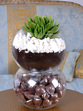succulent arrangement  Office Plants