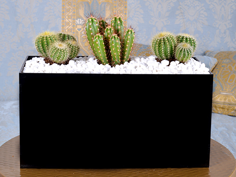 Modern Succulent Office Plants