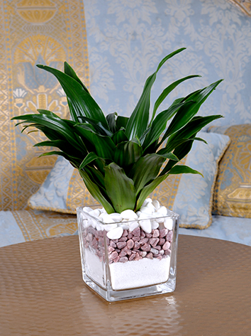 Modern Office Plant Office Plants