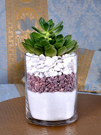 purity  Office Plants