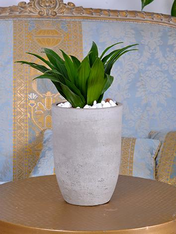 Concrete Plant  Office Plants