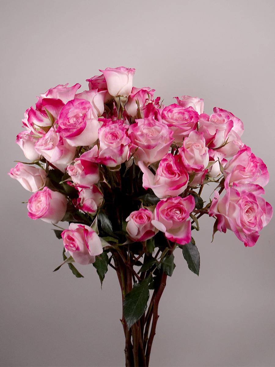 بيبي روز وردي  الزهور بالجملة