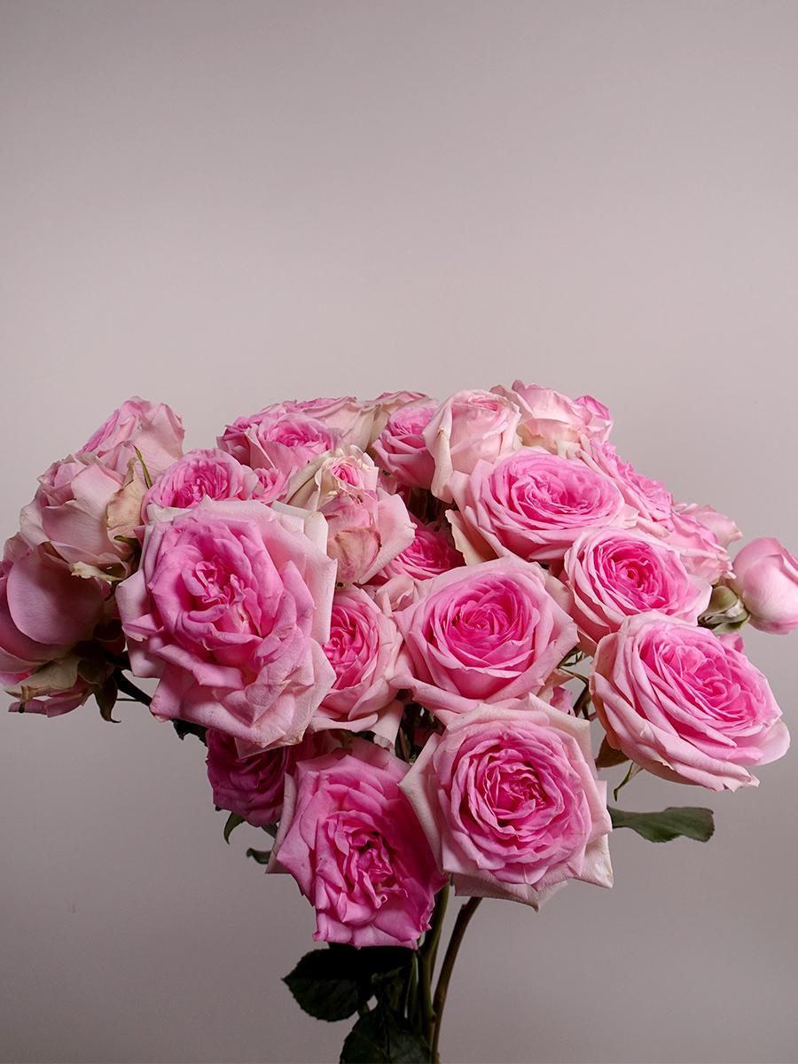ورود دينارا - وردي  الزهور بالجملة