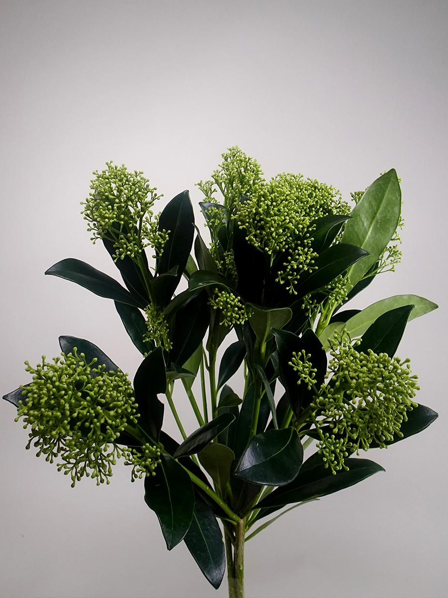 سكيما - أخضر  الزهور بالجملة