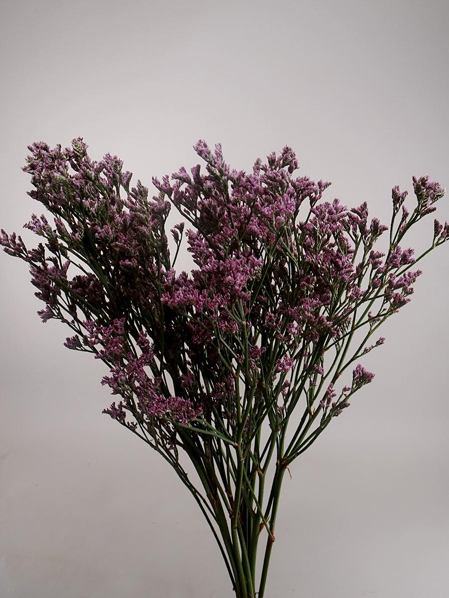 ليمنيوم - وردي  الزهور بالجملة