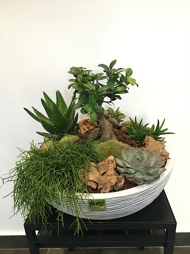 Succulent Garden 'Premium Collection'
