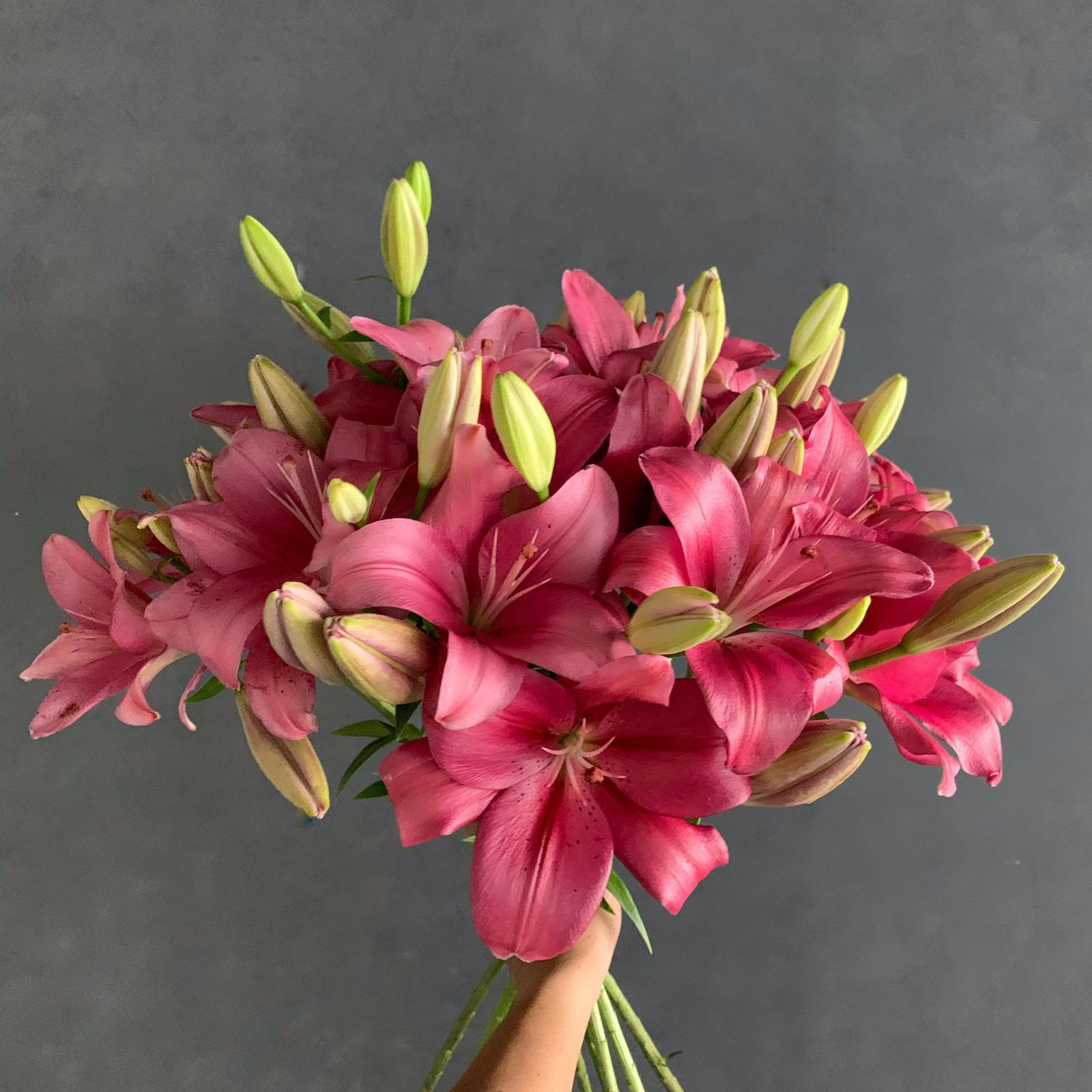 Lillium - Fangio Wholesale Flowers