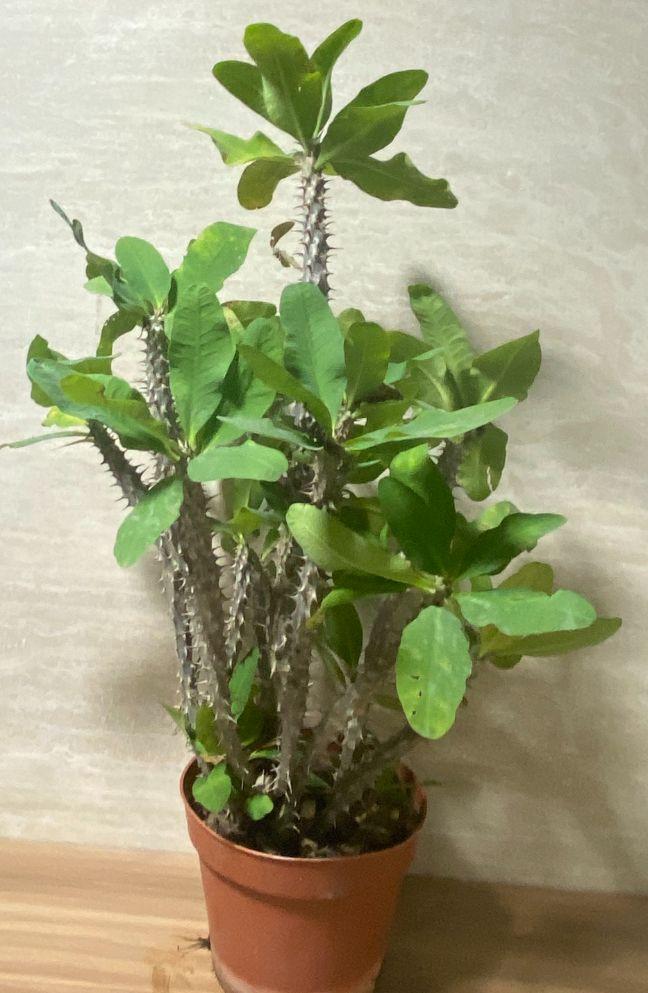 الفربيون نباتات خارجية