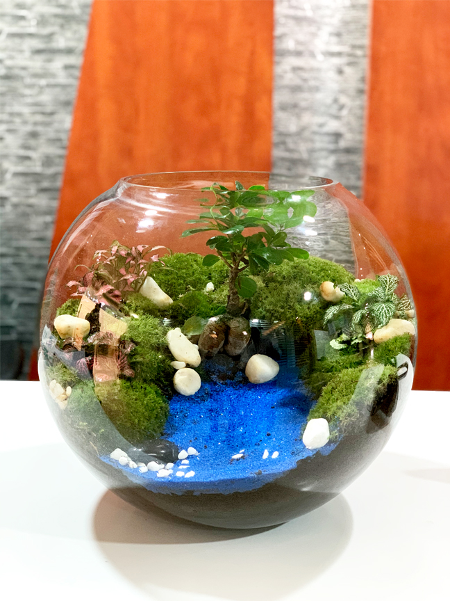 Hand Made Terrarium - Large  (limited Edition) Premium Collection
