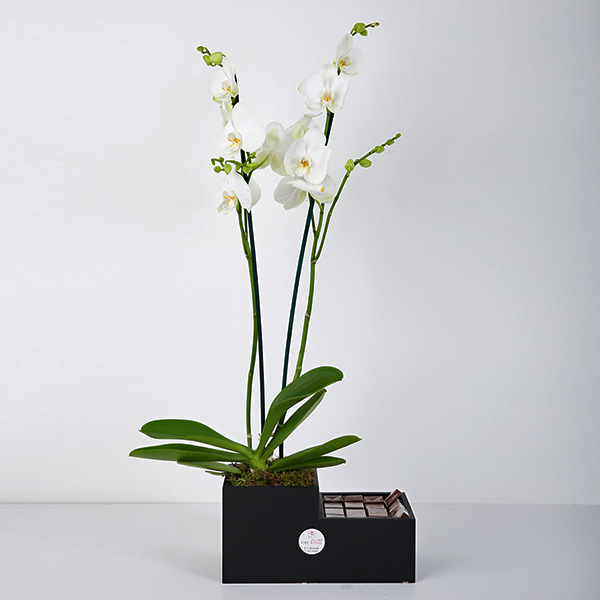 Orchid Plants In A Wooden Vase 'Bouquets'