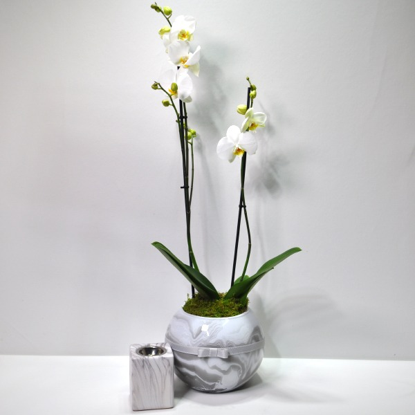 Marble Plant 'Combo Pack'