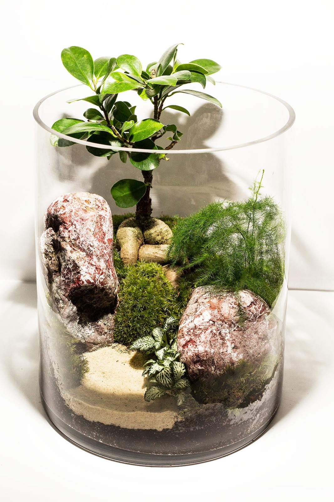 Hand Made Terrarium - Tall -2  (Limited Edition) Premium Collection