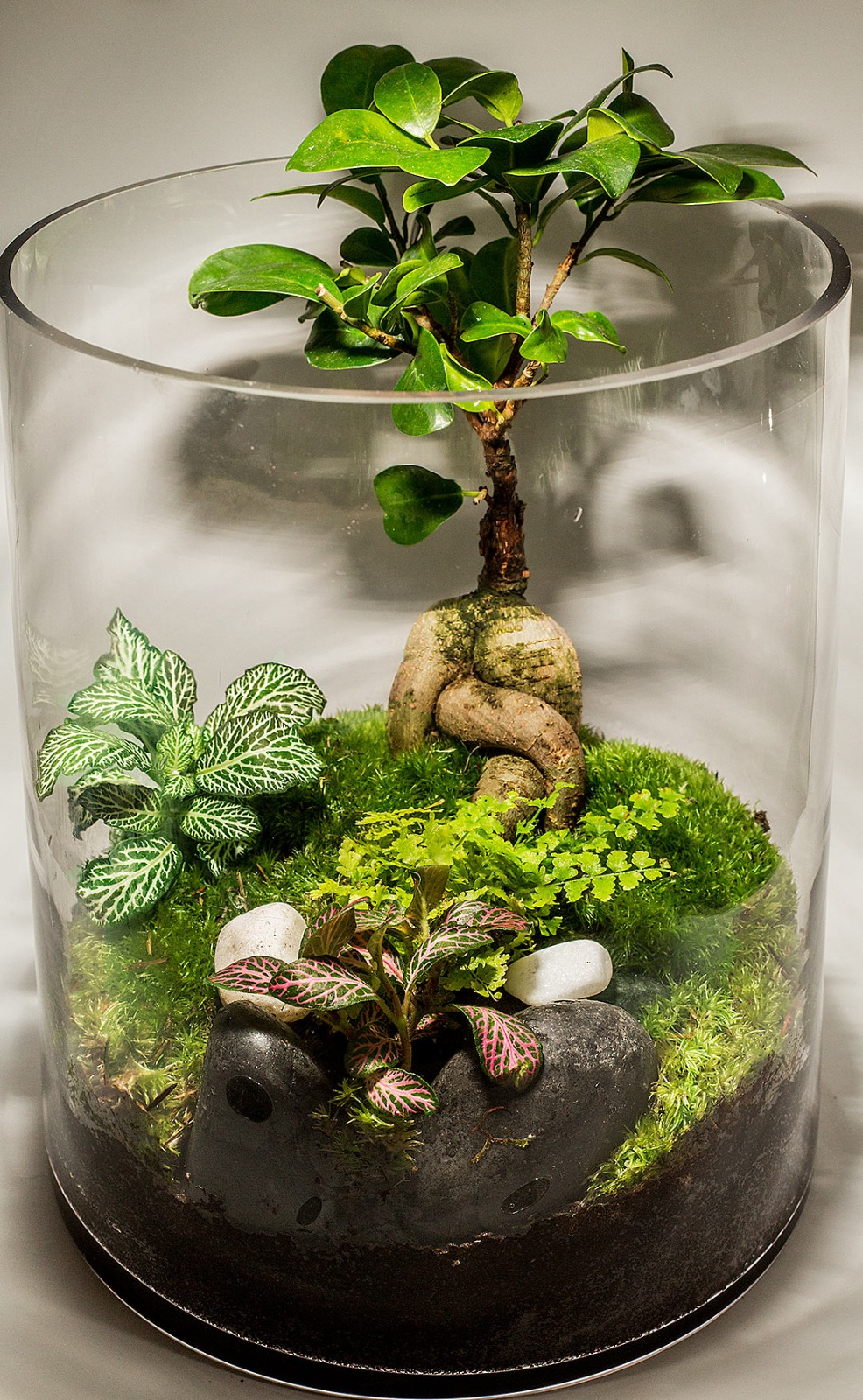 Hand Made Terrarium - Tall -3  (Limited Edition) Premium Collection