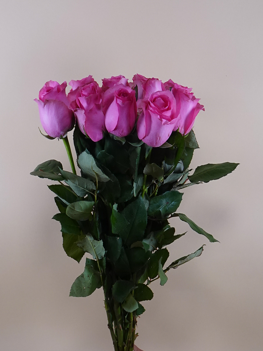 Rose Revival - Pink Wholesale Flowers