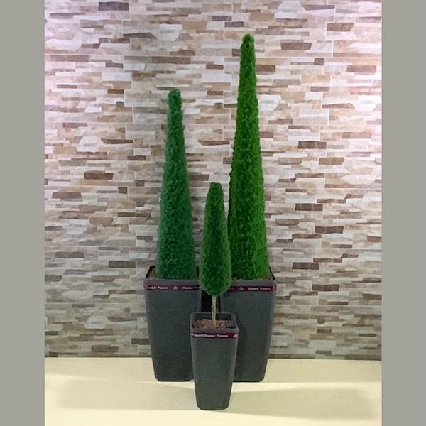 الهرم الثلاثي نباتات اصطناعية