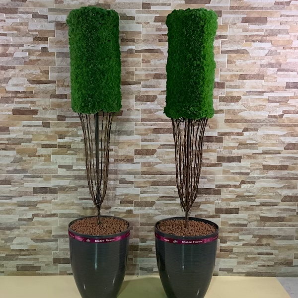 Duo Taxus 'Artificial Plants'