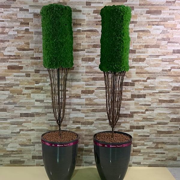 نبات الطقسوس الثنائي نباتات اصطناعية