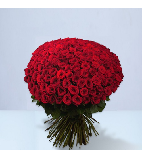 100 Red Roses Red Love