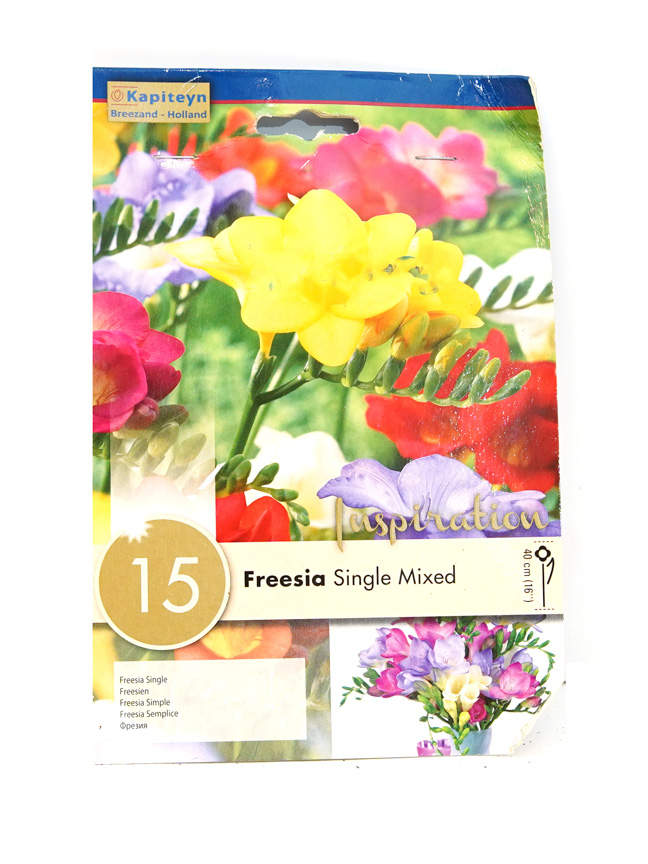 Freesia Single Mixed Seeds